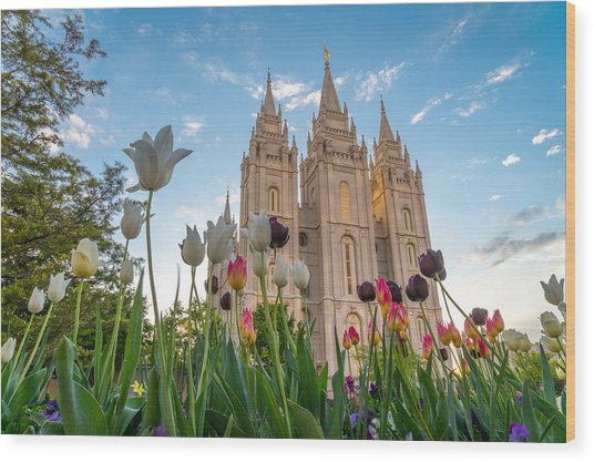 Tulips At The Temple Wood Print