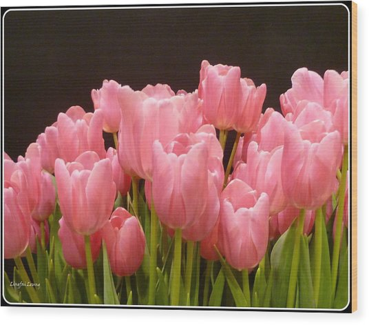 Tulips In Bloom Wood Print
