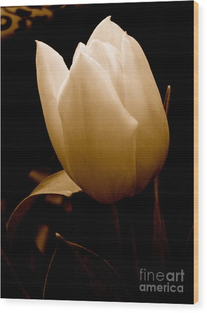 Tulips In Study 1 Wood Print