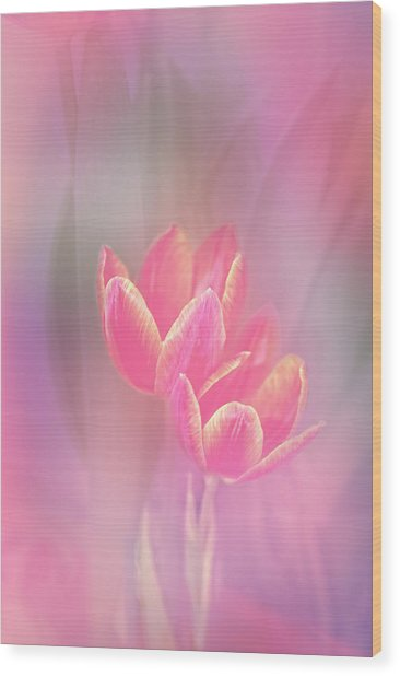 Tulips In The Pink Wood Print
