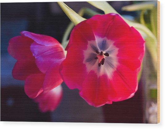 Tulips Mixed Light Wood Print by Paul Indigo