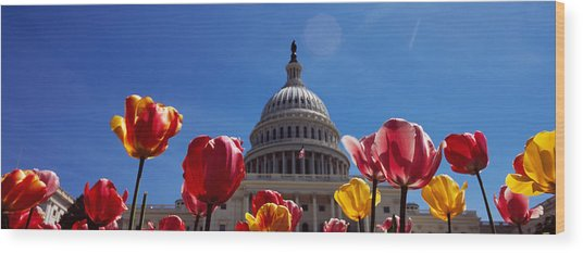 Tulips With A Government Building Wood Print