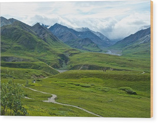 Tundra View From Eielson Visitor's Center In Denali Np-ak  Wood Print