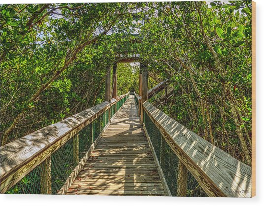 Tunnel Of Mangrove Green Wood Print