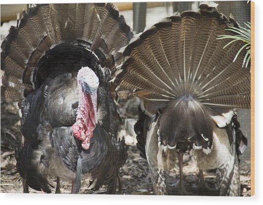 Wood Print featuring the photograph Turkey by Debbie Cundy