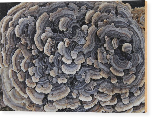 Turkey Tail Abstract Wood Print by Annette Gendler
