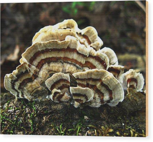 Turkey Tail Fungi Wood Print