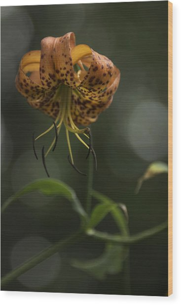 Turks Cap 0002 Wood Print