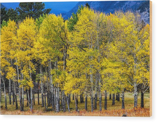 Turning Of The Aspens Wood Print