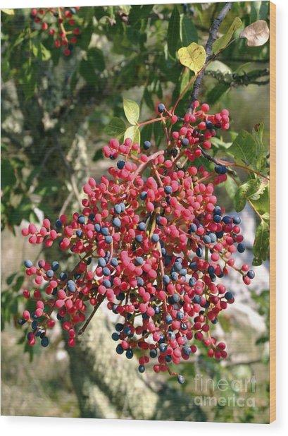 Turpentine Fruit (pistacia Terebinthus) Wood Print by Martyn F. Chillmaid