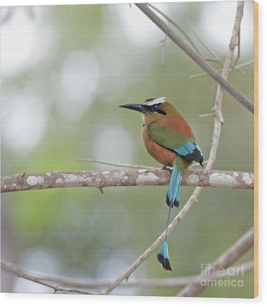 Turquoise Pendant.. Wood Print