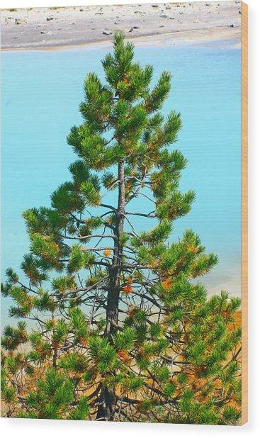 Turquoise Tree Wood Print