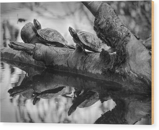 Turtle Bffs Bw By Denise Dube Wood Print