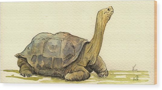 Turtle Galapagos Wood Print