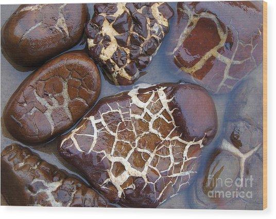 Turtle Or Stone Wood Print