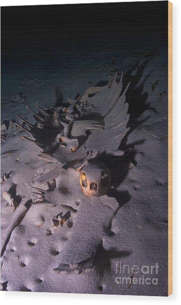 Turtle Skeleton Cave Wood Print by Soren Egeberg