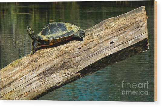 Turtle Sunning On The Log Wood Print