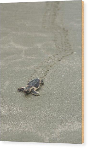 Turtle Tracks Wood Print