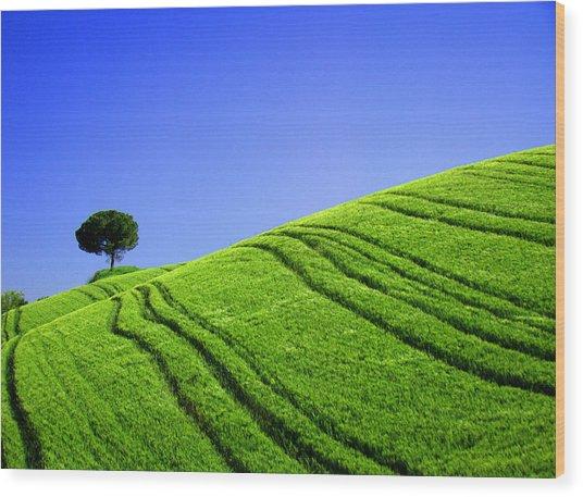 Tuscan Hill Wood Print by Giorgio Darrigo