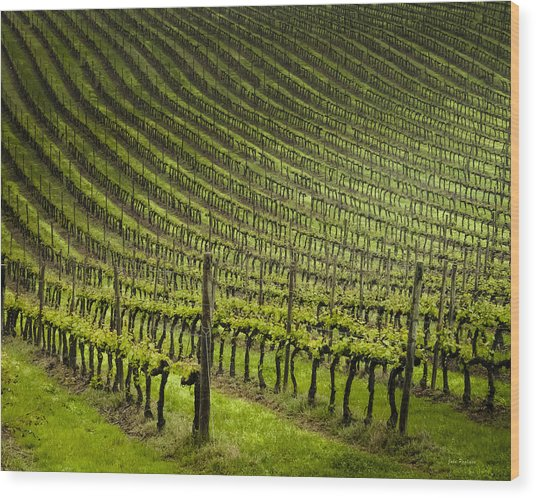 Tuscan Vineyard Series 1 Wood Print