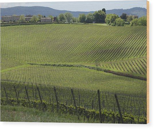 Tuscany Vineyard Series 2 Wood Print