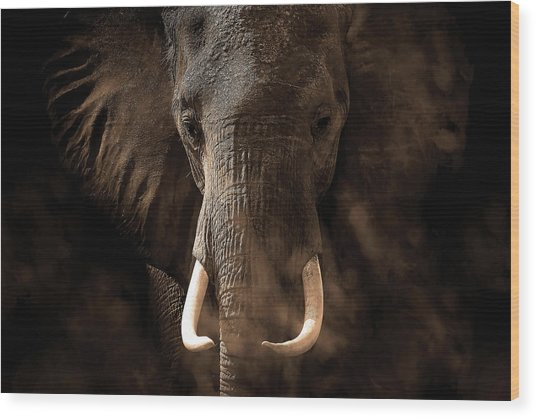 Tusker Wood Print by Bjorn Persson