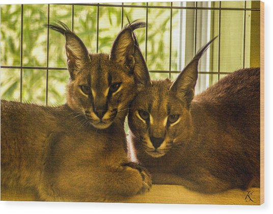Twin Caracals Wood Print