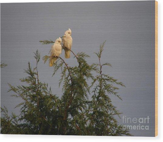 Twin Cockatoos Wood Print