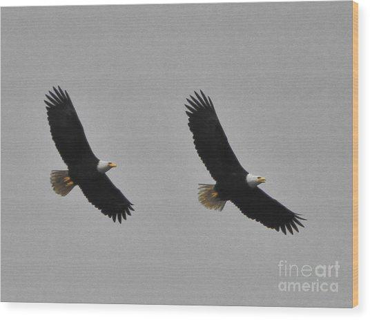 Twin Eagles In Flight Wood Print