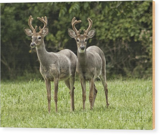 Twin Eight Point Bucks Wood Print