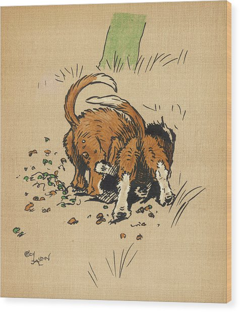Twin Puppies, Snip And Snap,  Try Wood Print by Mary Evans Picture Library