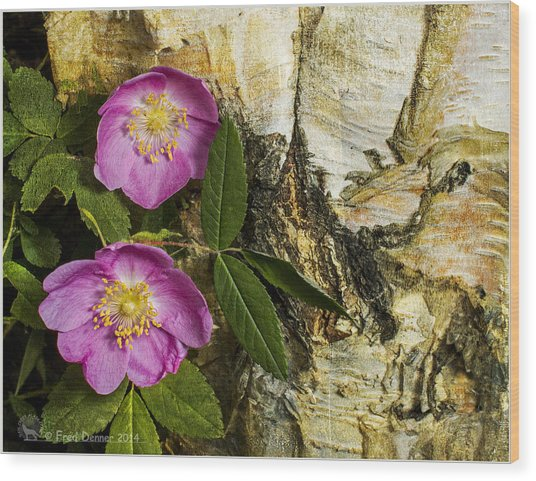 Twin Wild Roses Wood Print