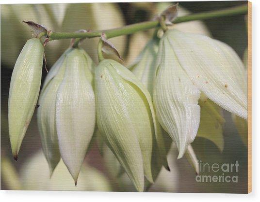 Twist-leaf Yucca Wood Print