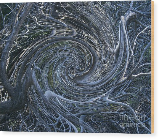 Twisted Briar Wood Print by Drew Shourd
