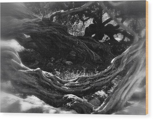 Twisted Wood Print by Kelli Donovan
