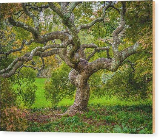 Twisted Maple Wood Print