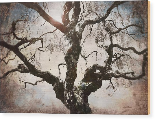 Twisted Tree I Wood Print