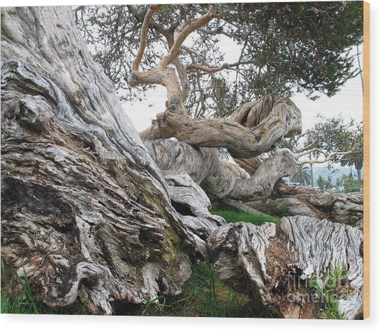 Twisted Tree Wood Print