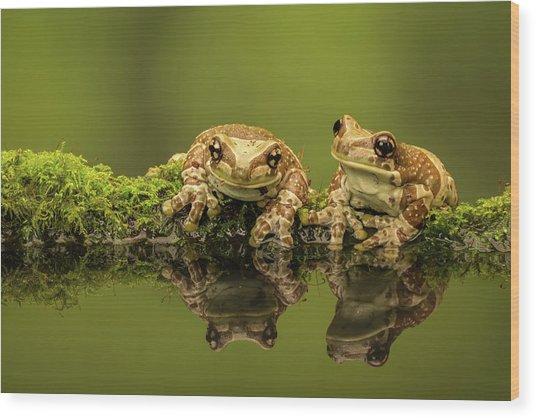 Two Amazon Milk Frogs Wood Print by Markbridger