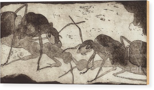 Two Ants In Communication - Etching Wood Print