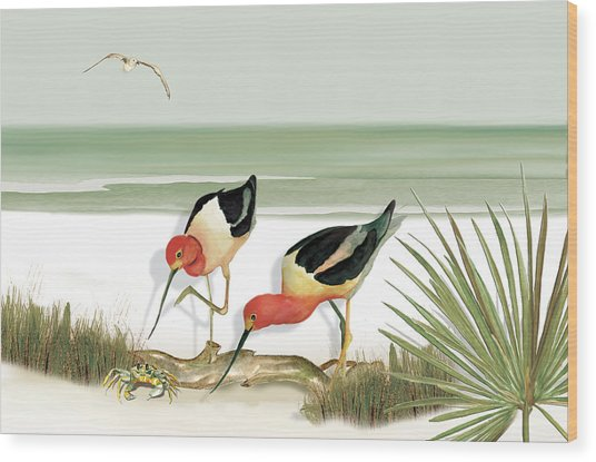 Two Avocets Wood Print