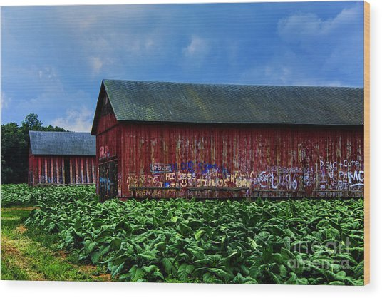 Two Barns Ready Wood Print