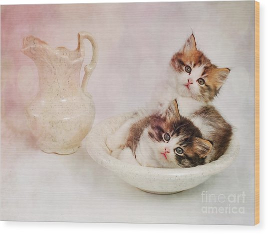 Two Clean Kittens  Wood Print