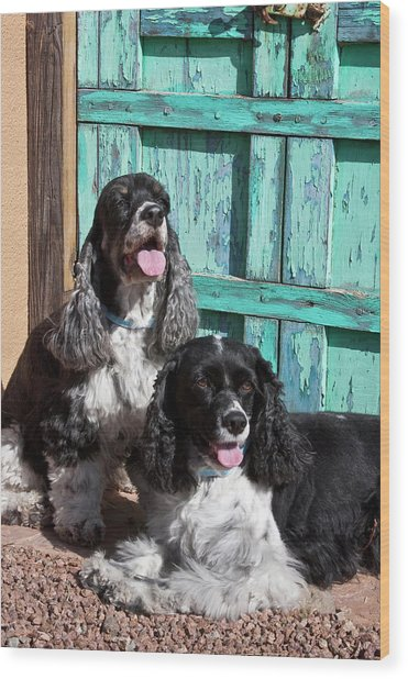 Two Cocker Spaniels In Front Of An Old Wood Print