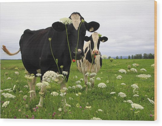 Two Cows In A Field Wood Print