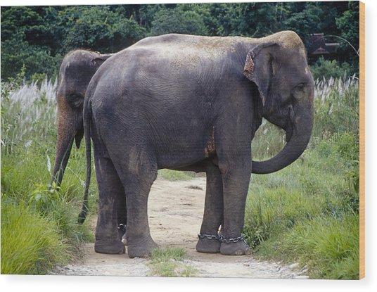Two Elephants Wood Print