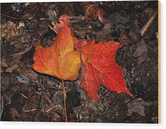 Two Fallen Autumn Leaves Wood Print