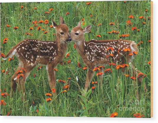Two Fawns Talking Wood Print