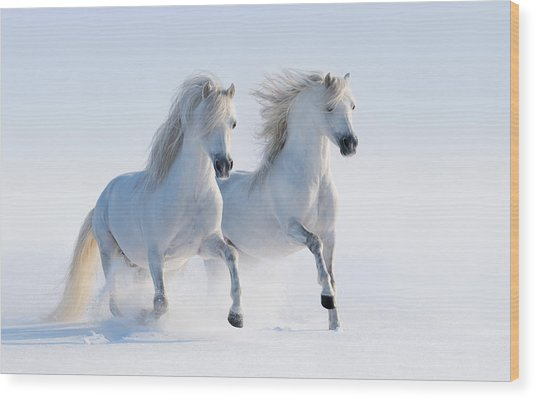 Two Galloping Snow-white Horses Wood Print by Abramova_Kseniya