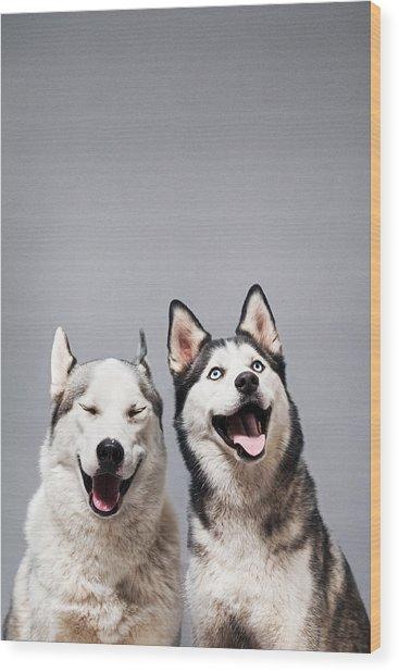 Two Happy Husky Dogs Wood Print by Ilka & Franz
